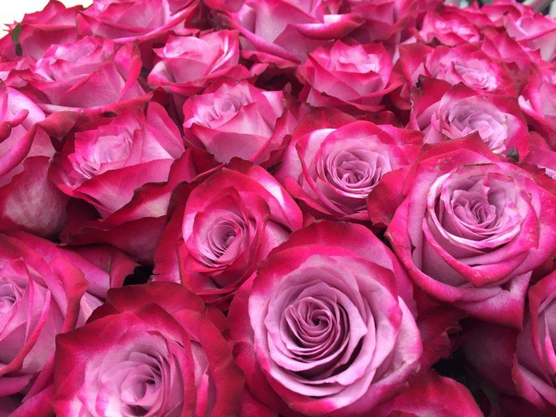 Corso coltivare rose