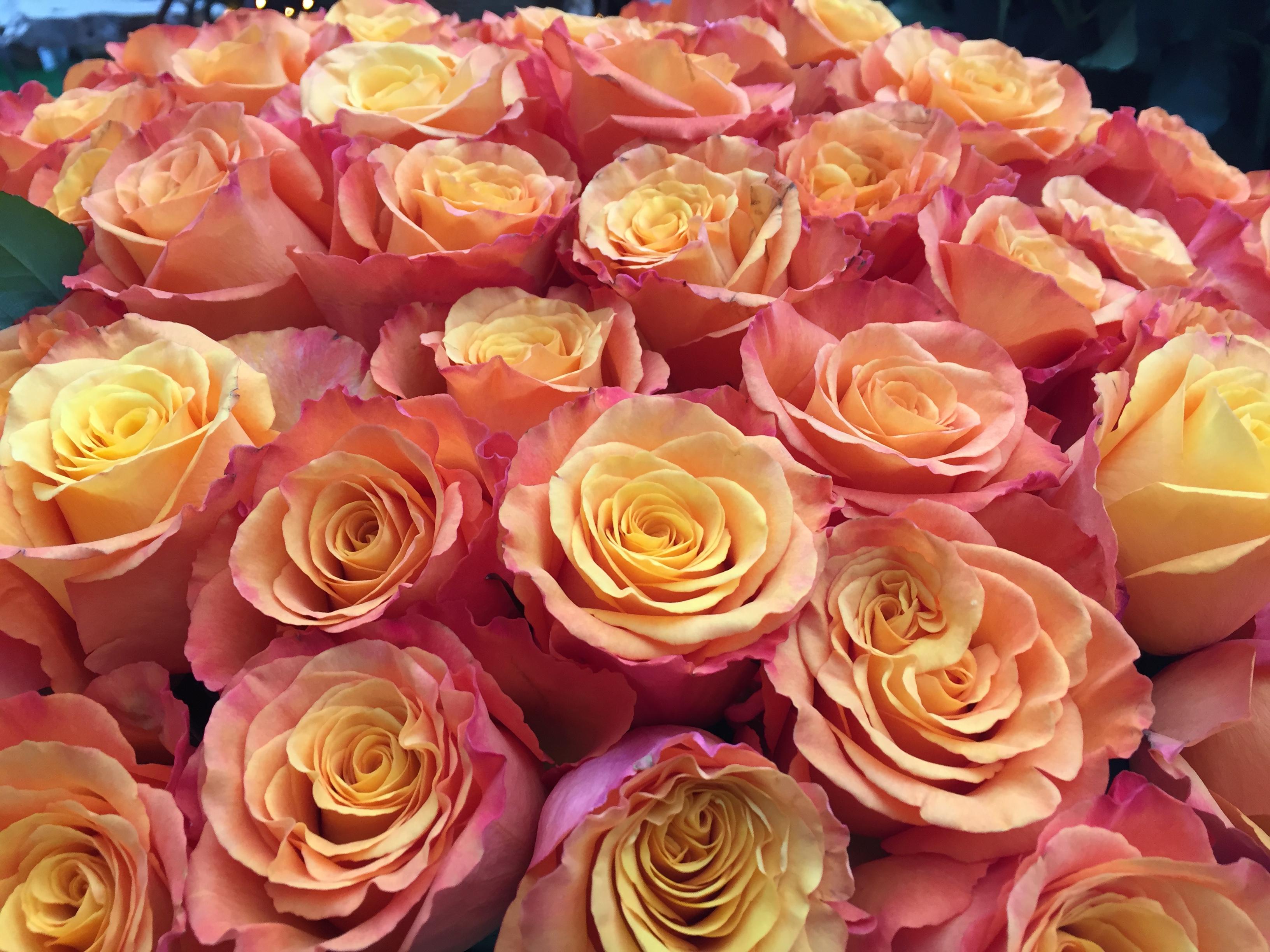 Mostra delle Rose - dal 29 aprile 2018 - Happyflor garden